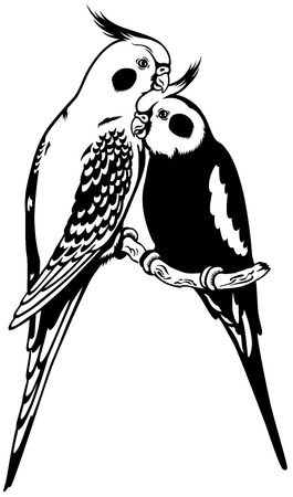 two parrots: cockatiel parakeets, black and white image