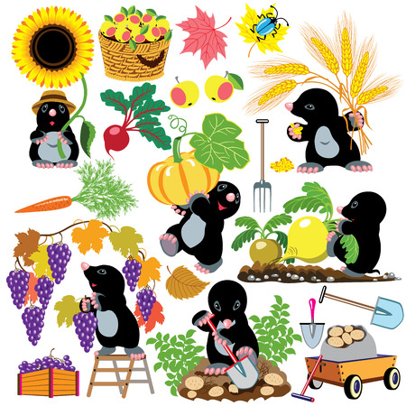 set with mole working in the garden, autumnal season harvest,cartoon pictures for little kids