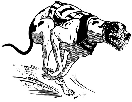 chart: prowadzenie psa wyścigi, angielski greyhound rasy, obraz czarno-biały