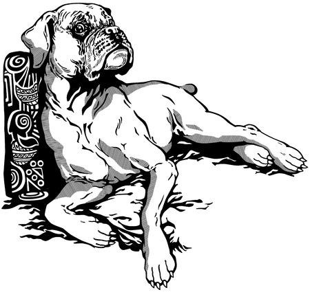 perro boxer: raza del perro del boxeador, blanco y negro ilustración