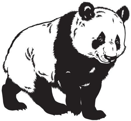 giant panda: giant panda bear, black and white image Illustration