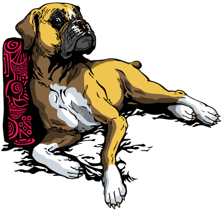 perro boxer: perro de raza boxer