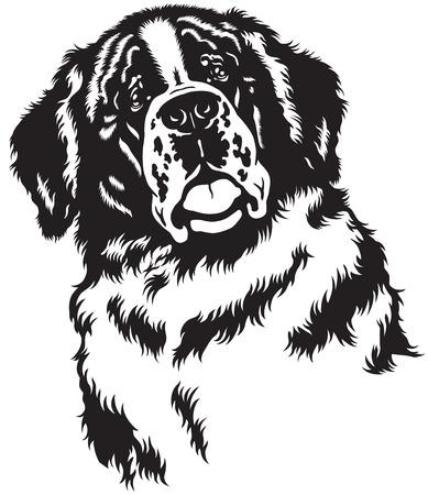 dog head, saint bernard breed,black and white image Vector