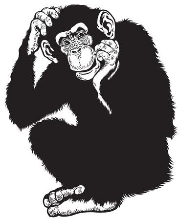 omnivore: chimpanzee monkey sitting pose, black and white image Illustration