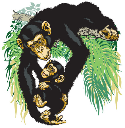 troglodyte: chimpanzee mother holding her baby chimp Illustration