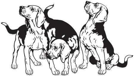 perro de caza: tres perros beagle, perros de caza se crían, imagen en blanco y negro Vectores