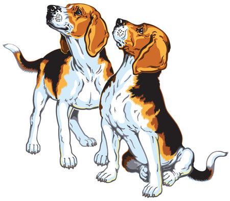 2 ビーグル犬の猟犬、狩猟犬の品種は、白い背景で隔離の画像