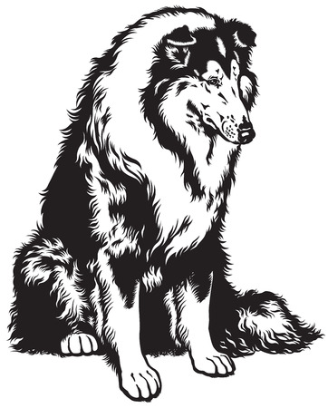 black haired: rough or long haired collie, scottish shepherd dog, black and white image Illustration