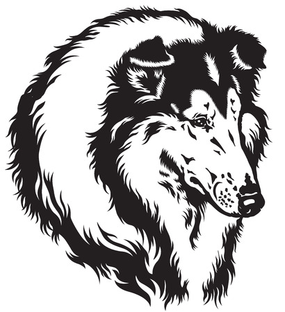 rough or long-haired collie dog head, black and white image