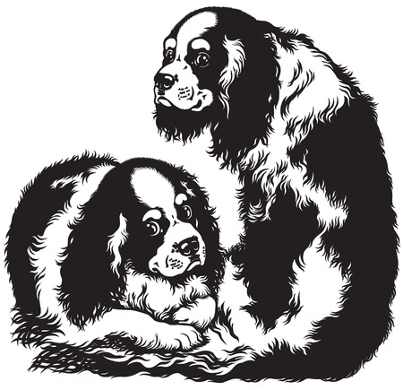 two blenheim cavalier king charles spaniels, toy dogs breed, black and white image