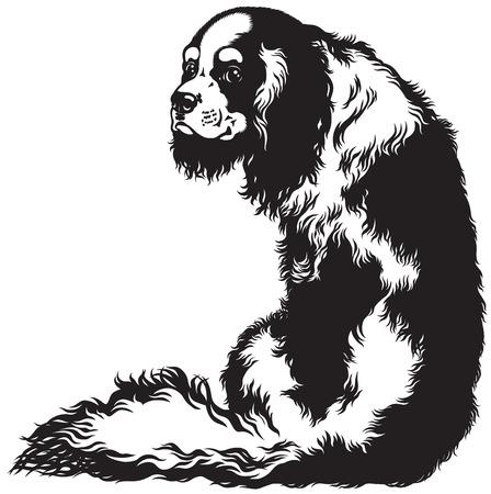 blenheim cavalier king charles spaniel, lap dogs breed, black and white image Illustration