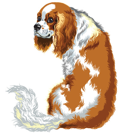 lap dog: blenheim cavalier king charles spaniel, lambiscono cani di razza, immagine isolato su bianco Vettoriali