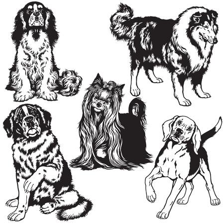 lap dog: set con i cani di razze differenza, immagini in bianco e nero isolati Vettoriali