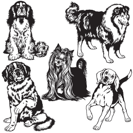 lap dog: set with dogs of difference breeds, black and white isolated images Illustration