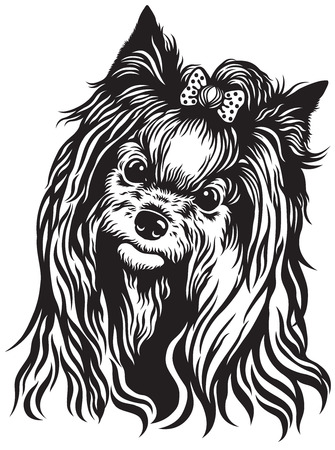 lap dog: yorkshire terrier breed dog head, black and white image Illustration