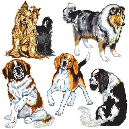 lap dog: set con i cani di razze differenza, immagini isolato su bianco Vettoriali
