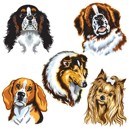 lap dog: set con cani teste isolato su bianco Vettoriali