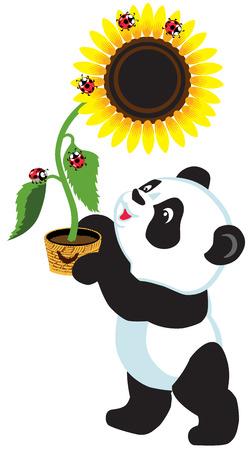 sunflower isolated: cartoon panda bear holding a sunflower , isolated image for little kids