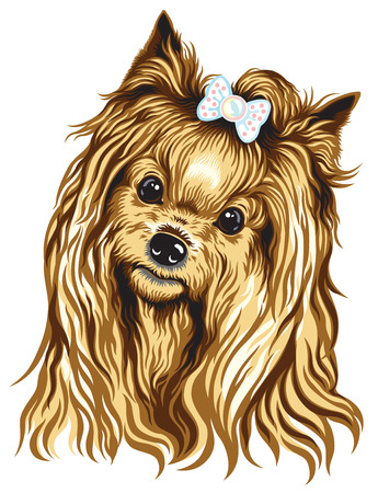 dog breeds: dog head, yorkshire terrier , image isolated on white