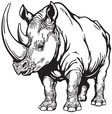 rhinoceros: standing rhinoceros or rhino, black and white image