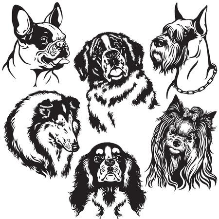 lap dog: set con cani capi di razze differenza, immagini in bianco e nero isolati