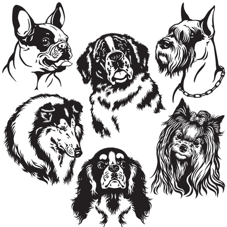 collie: set with dogs heads of difference breeds , black and white isolated images