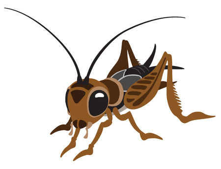 cartoon cricket bug isolated on white
