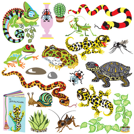 terrarium: cartoon set with reptiles ,amphibians and insects . Animals of terrarium isolated on white Illustration