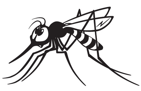 insect mosquito: cartoon mosquito gnat .Black and white image