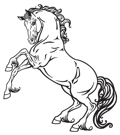 rearing horse black and white outline image Illustration
