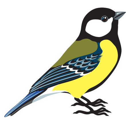 great titmouse side view isolated image