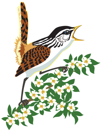 marsh wren songbird singing on a blooming branch
