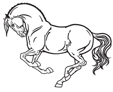 gallop: horse stallion in gallop. Side view outline black and white vector