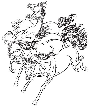 Horses four running wild mustangs.