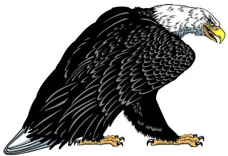 Bald eagle. Standing white headed American bird . Tattoo style vector illustration