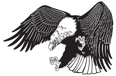 bald eagle in the fly . White headed American bird . Black and white tattoo style vector illustration