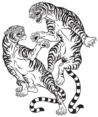 Tigers fighting, two roaring big cats in the battle. Black and white tattoo style vector illustration.