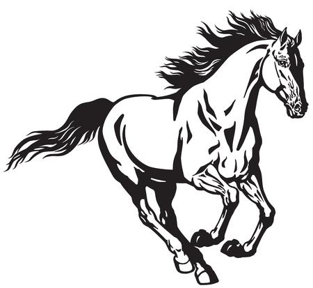 laufendes Hengstpferd. Galoppierender wilder Pony Mustang. Schwarze und weiße isolierte Vektorillustration