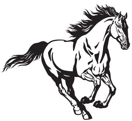 running stallion horse. Galloping wild pony mustang  .Black and white isolated  vector illustration