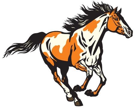 cavallo selvaggio al galoppo. Cavallino color pinto Vettoriali