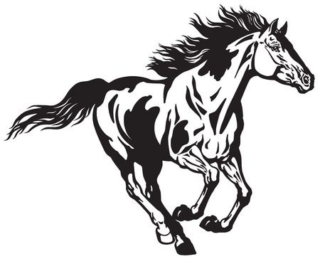 horse running free . Pinto colored wild pony mustang in the gallop . Black and white vector illustration Illustration