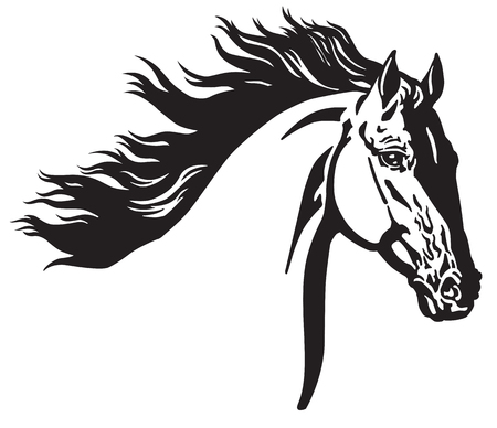 head of wild horse . Black and white vector illustration Çizim