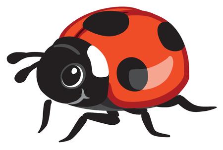 cartoon ladybird or ladybug . Isolated vector illustration