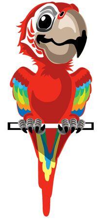 Cartoon red macaw parrot. Ara Ararauna. Vector illustration isolated on white Ilustração