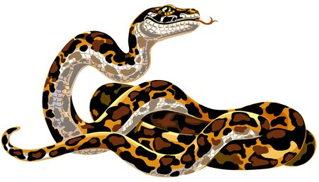 Cartoon python big snake. Boa constrictor isolated on white. Vector illustration