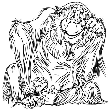 cartoon orangutan great ape. Sitting big monkey. Adult male. Isolated vector illustration