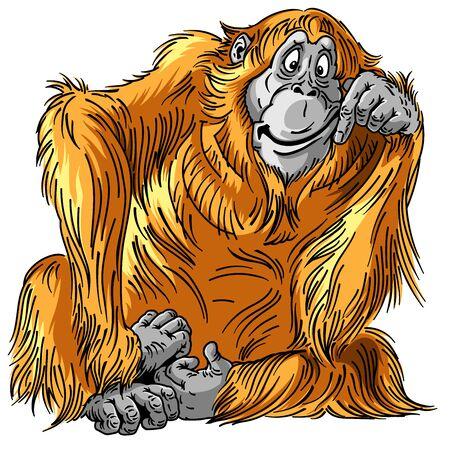 cartoon orangutan great ape. Sitting orange big monkey. Adult male. Isolated vector illustration Ilustração