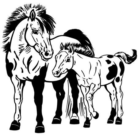 Chevaux poneys Shetland. Jument tachetée miniature avec petit poulain. Illustration vectorielle isolé noir et blanc