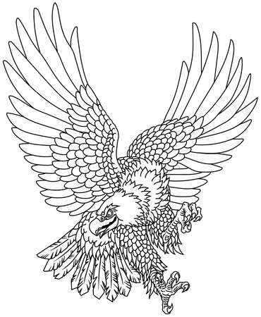 American whitehead bald eagle. Landing attacking prey bird.  Tattoo style outline vector illustration