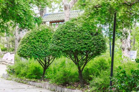 arbre paysage: paysage arbre vert